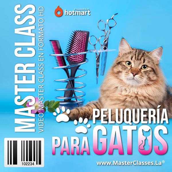 Curso Peluquería para Gatos