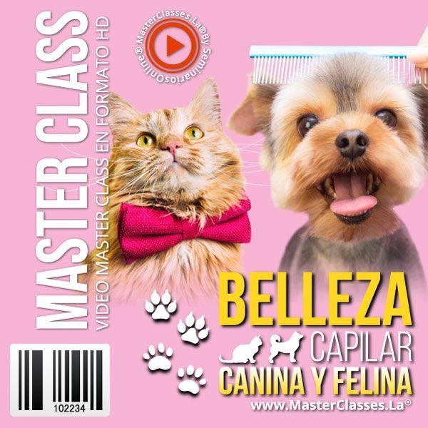 Curso Belleza Capilar Felina y Canina