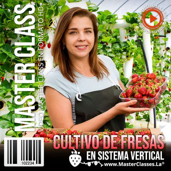 Curso Cultivo de Fresas en Sistema Vertical